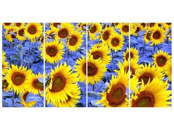 Obraz slunečnic (F000619F16080)