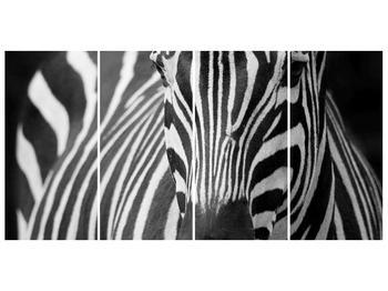 Obraz černobílého detailu zebry (F000715F16080)