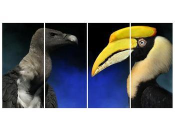 Obraz ptačích zobáku (F001358F16080)
