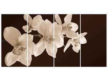 Krásný obraz bílých květin (F001888F16080)