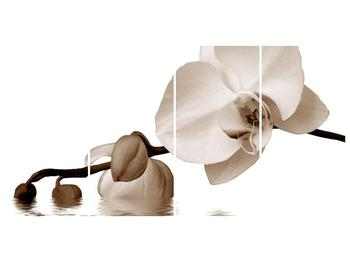 Krásný obraz bílé orchideje (F001900F16080)