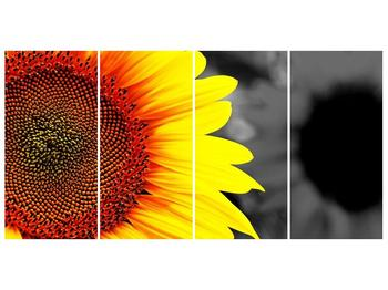 Obraz květu slunečnice (F002400F16080)