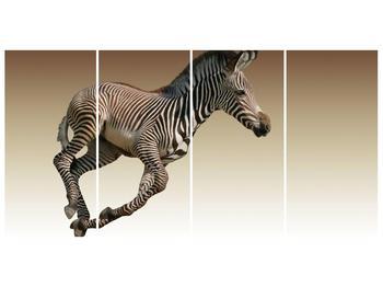 Obraz běžící zebry (F002416F16080)