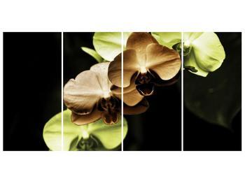 Obraz hnědých a zelených orchideí  (F002723F16080)