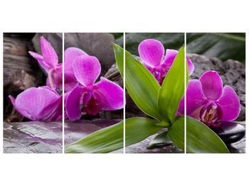 Obraz fialových orchidejí s listím (F004027F16080)