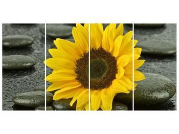 Moderní obraz F005794F16080 (F005794F16080)