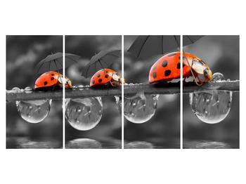 Obraz lienok sedembodkových s dáždnikmi (K012059K16080)