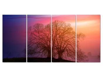 Obraz stromov v hmle (V020088V16080)