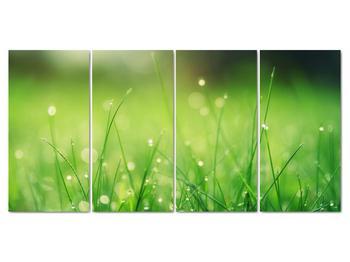 Obraz - rosa na tráve (V020169V16080)