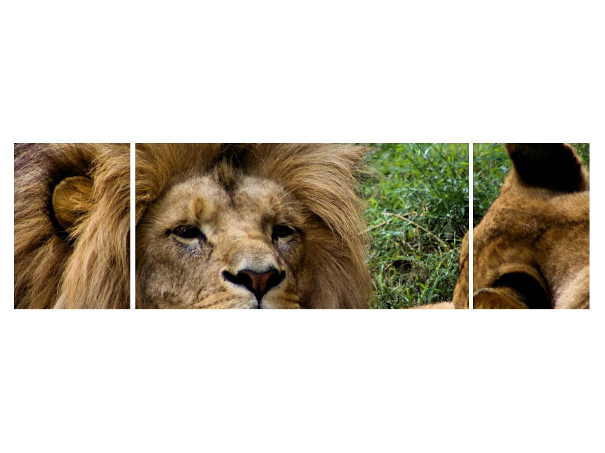 Moderna slika K010143K17050 (K010143K17050)