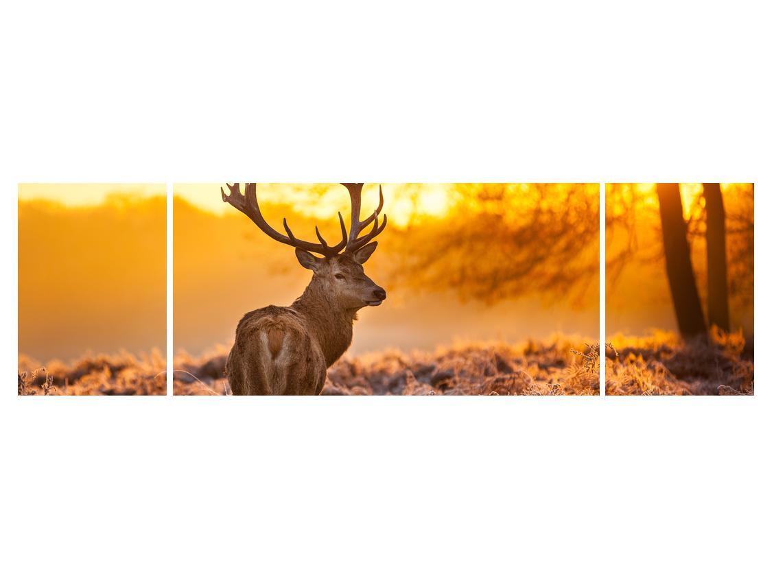 Slika jelena (K011281K17050)