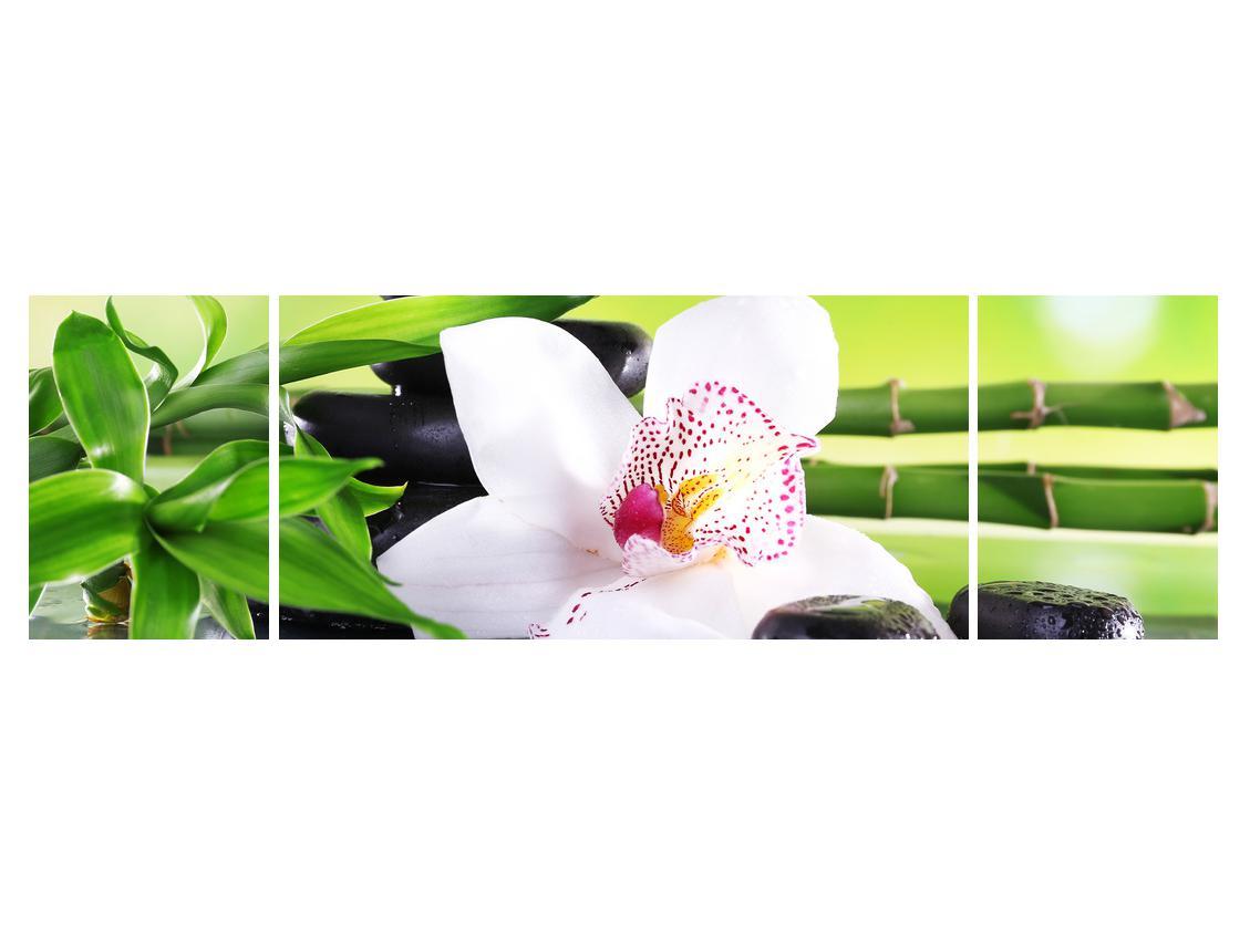 Slika orhideje (K011995K17050)