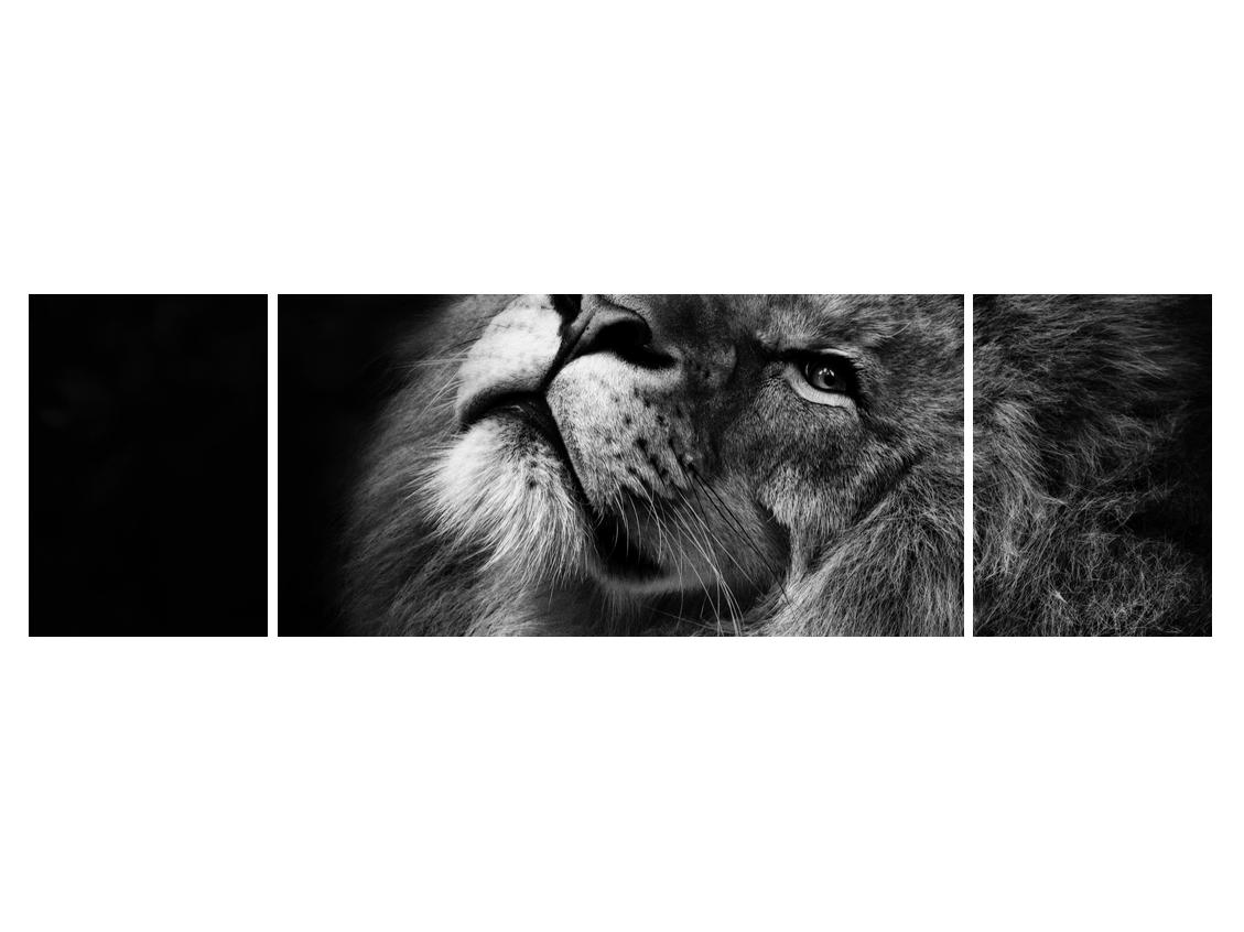 Crno-bijela slika lava (K012767K17050)