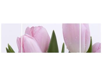 Obraz růžových tulipánů (F000389F17050)