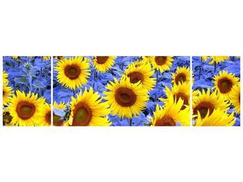 Obraz slunečnic (F000619F17050)