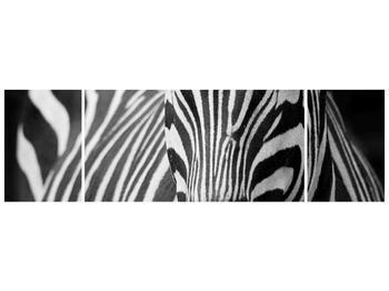 Obraz černobílého detailu zebry (F000715F17050)