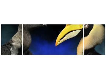 Obraz ptačích zobáku (F001358F17050)