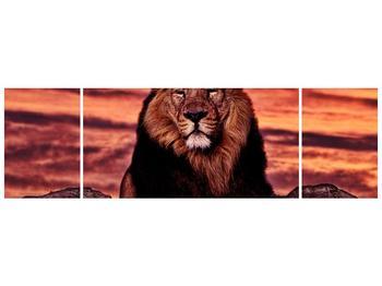 Obraz krále zvířat (F001507F17050)