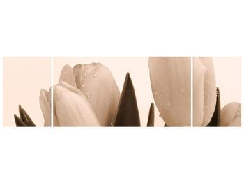 Krásný obraz tulipánů (F001883F17050)