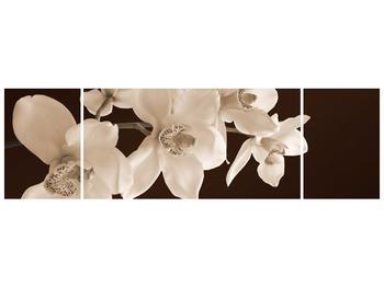 Krásný obraz bílých květin (F001888F17050)