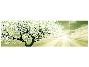 Obraz stromu na jaře (F002291F17050)