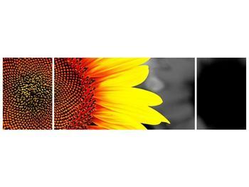 Obraz květu slunečnice (F002400F17050)