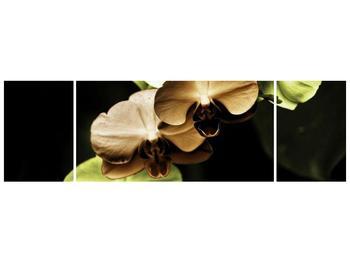 Obraz hnědých a zelených orchideí  (F002723F17050)