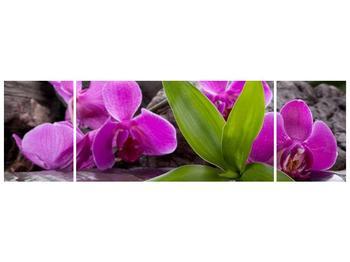Obraz fialových orchidejí s listím (F004027F17050)