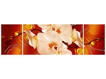 Obraz bílých orchidejí (F005694F17050)