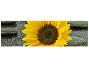 Moderní obraz F005794F17050 (F005794F17050)