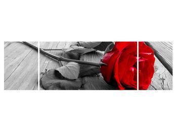 Obraz červenej ruže (K011138K17050)