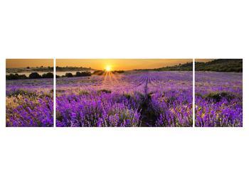 Tablou cu câmp de levandă (K011154K17050)