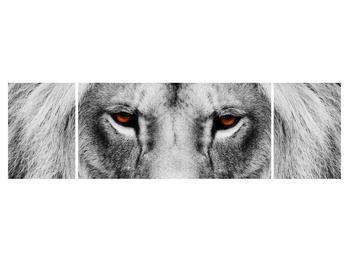 Černobílý obraz lva (K011390K17050)