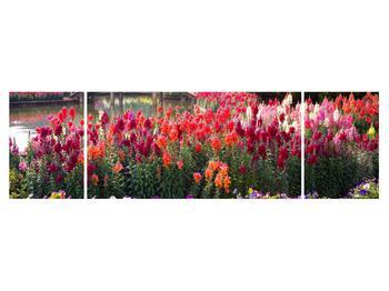 Obraz kvetín (K012048K17050)