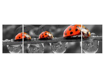Obraz lienok sedembodkových s dáždnikmi (K012059K17050)