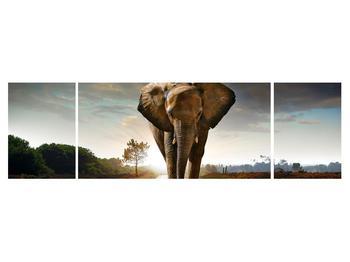 Tablou cu elefant (K012479K17050)