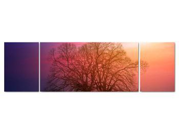 Obraz stromov v hmle (V020088V17050)