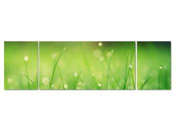 Obraz - rosa na tráve (V020169V17050)