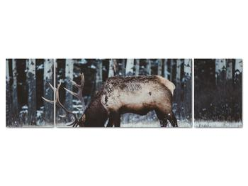 Obraz - jeleň v zime (V020179V17050)