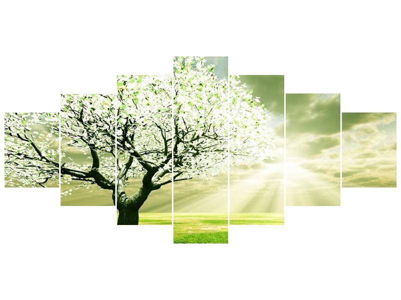 Obraz stromu na jaře (F002291F210100)