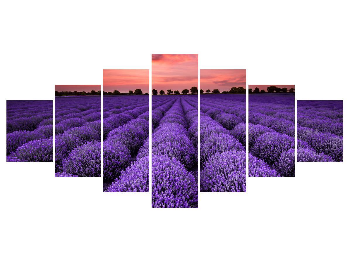 Slika polja lavande (K014685K210100)