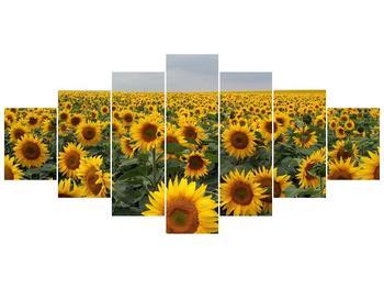 Obraz slunečnicového pole (F000397F210100)