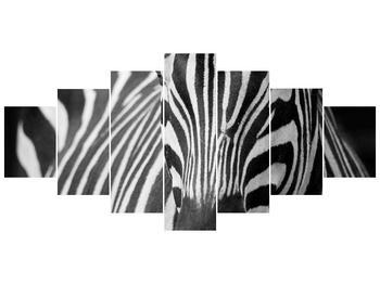 Obraz černobílého detailu zebry (F000715F210100)