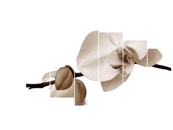 Krásný obraz bílé orchideje (F001900F210100)