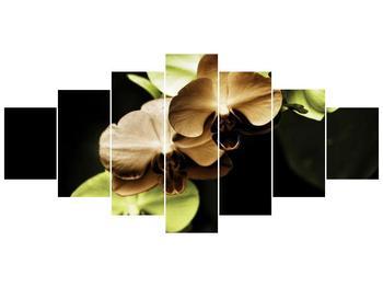 Obraz hnědých a zelených orchideí  (F002723F210100)