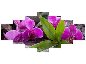 Obraz fialových orchidejí s listím (F004027F210100)