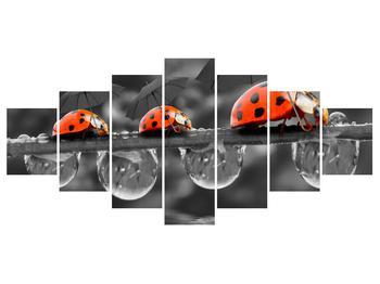 Obraz lienok sedembodkových s dáždnikmi (K012059K210100)