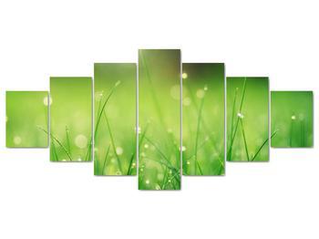 Obraz - rosa na tráve (V020169V210100)