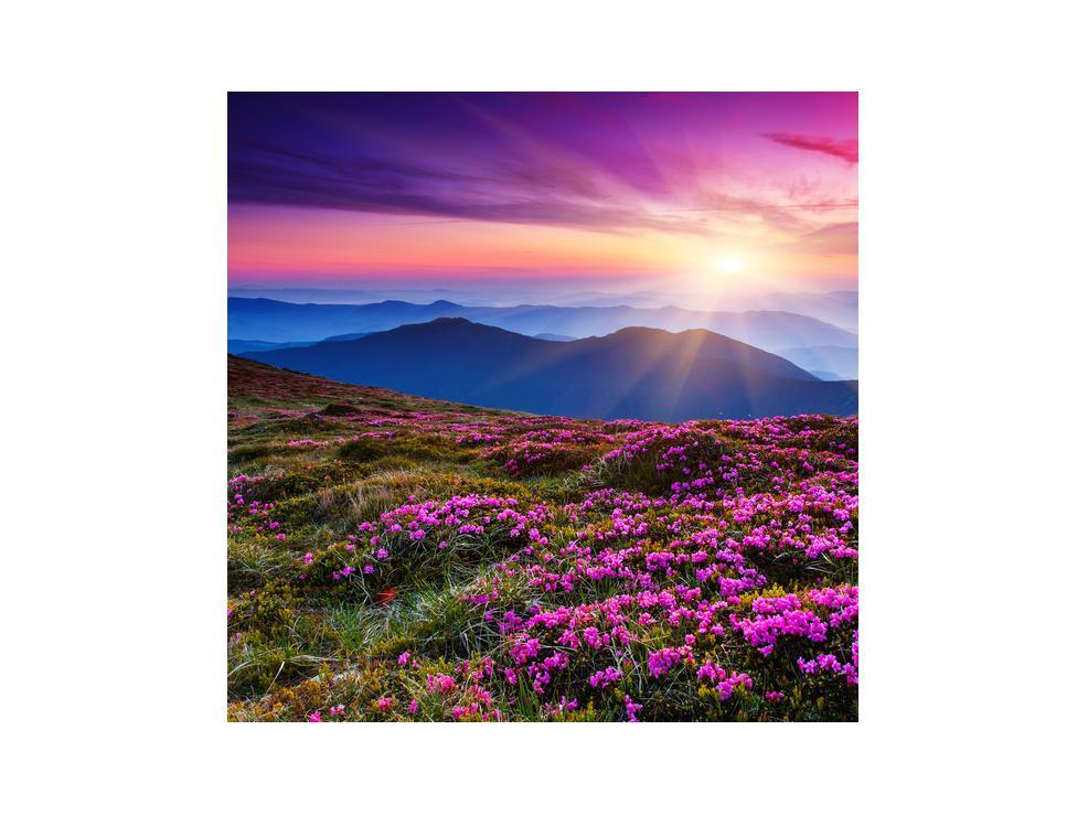 Slika planinskog rascvijetalog krajolika (K011322K3030)