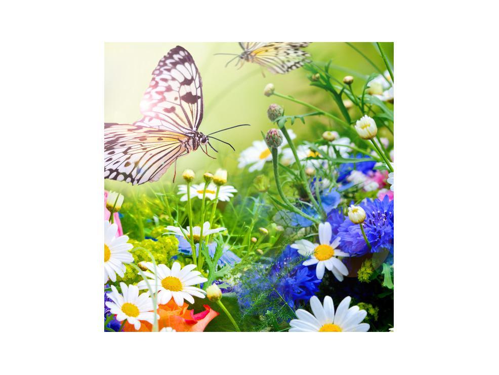 Slika poletnih cvetov z metuljem (K012220K3030)